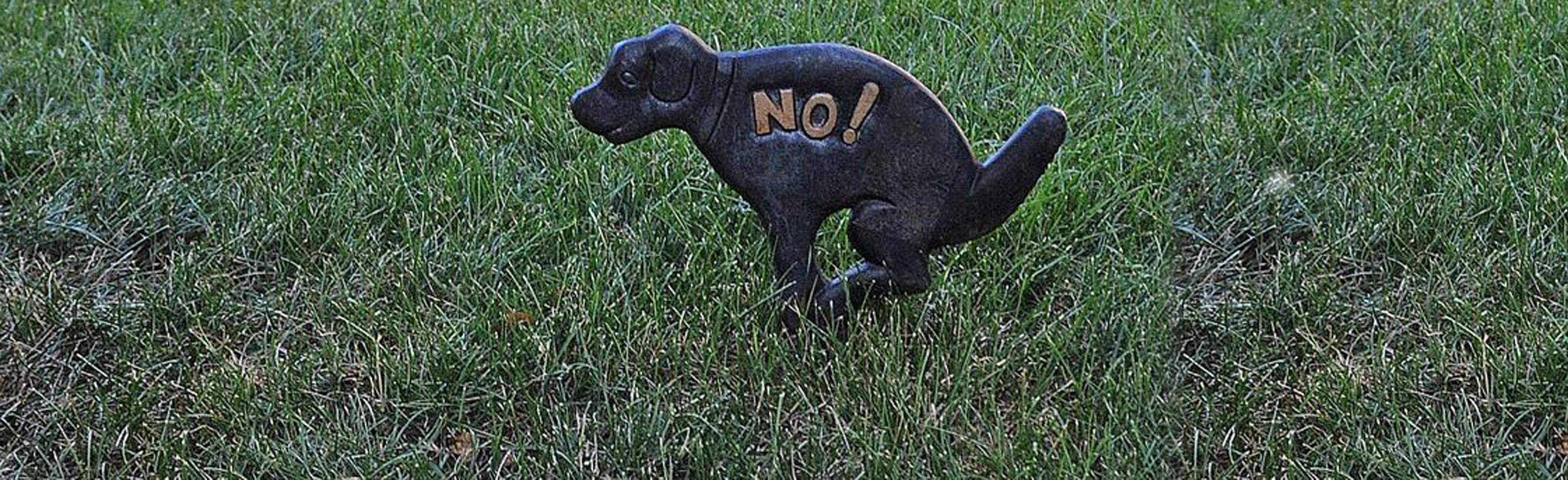 Evitar que tu perro haga sus necesidades en el jard n for Ahuyentar perros del jardin